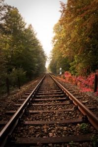 Schienen-im-Wald-a18939542