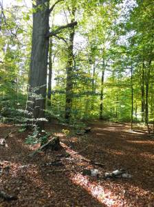 2014_10_19_Hainholz Herbstspaziergang (37)