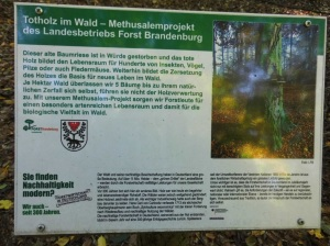 2014_10_19_Hainholz Herbstspaziergang (55)