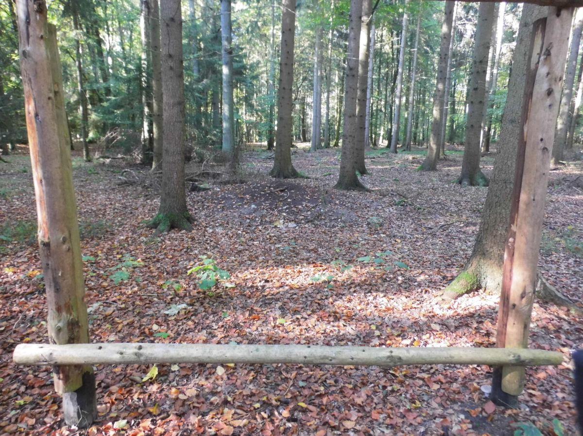 Tag des Waldes im Hainholz am 20.3. um 14 Uhr