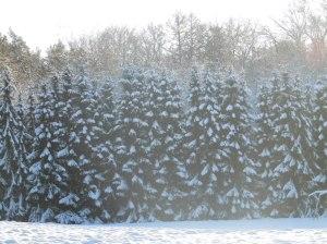 2014_12_29_Hainholz Winterbilder (2)