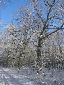 2014_12_29_Hainholz Winterbilder (7)