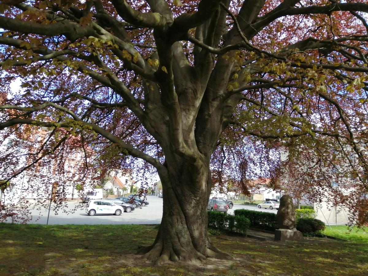 Pritzwalks Wunderbaum