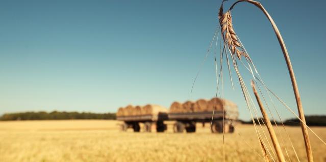 landwirtschaft_03