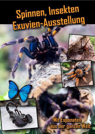 Spinnen, Insekten Ausstellung 2019