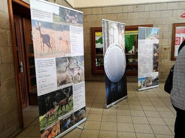 Ausstellung Wildunfälle_Vogel