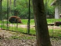 2020_05_17_Tierpark Perleberg_05